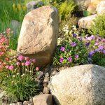In ihrem natürlichem Umfeld tanken die Alpinpflanzen viel Sonne. Wählen Sie daher eine Südhang für Ihren Steingarten.