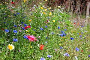 Pflegeleicht und zugleich beeindruckend schön: Die Blumenwiese müssen Sie in der Regel nur zweimal jährlich mähen.