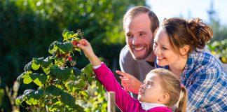 Nachkatzen aufgepasst: Beeren aus dem Naschgarten sind nicht nur lecker, sondern enthalten auch wertvolle Inhaltsstoffe.