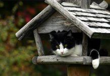 Das Vogelhaus sollte für Katzen nur schwer erreichbar sein. Achten Sie auch darauf, dass die Vögel den Platz rund um das Vogelhaus gut einsehen können.