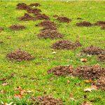 Was viele nicht wissen: Der Maulwurf ist ein Nutztier. Er frisst Schädlinge und vertreibt Wühlmäuse.