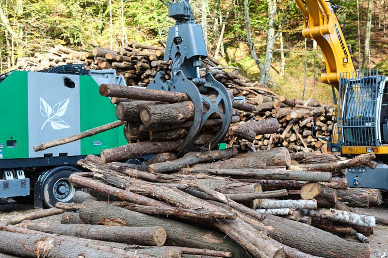 Brennholz aus der Region ist eine klimafreundliche Energiequelle.